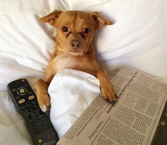 luxury dog e1441370371713